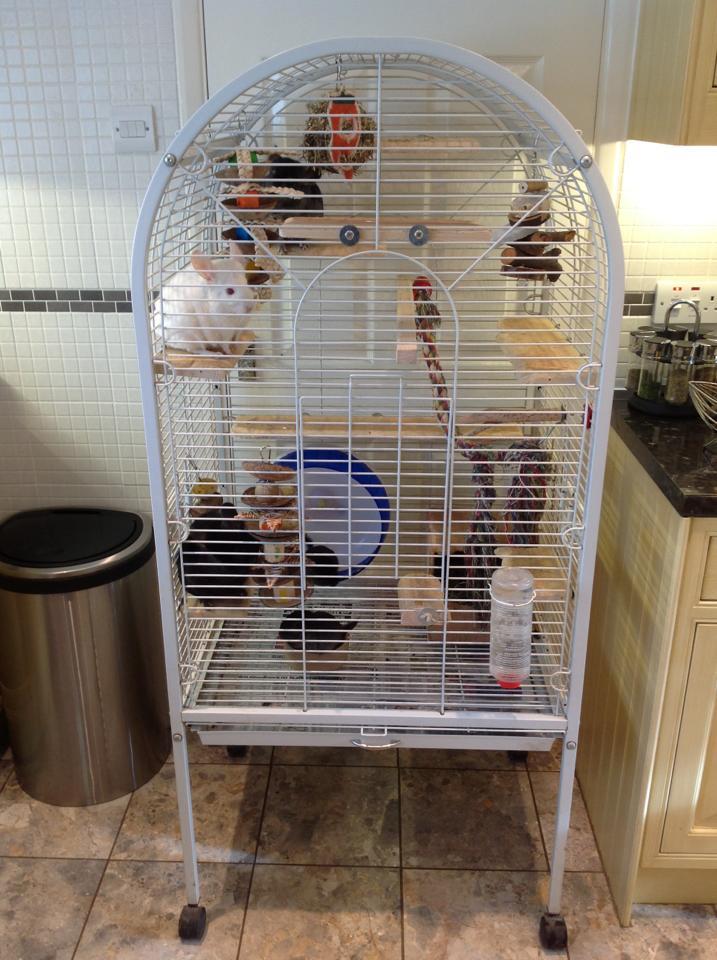 chinchilla cage - photo #25